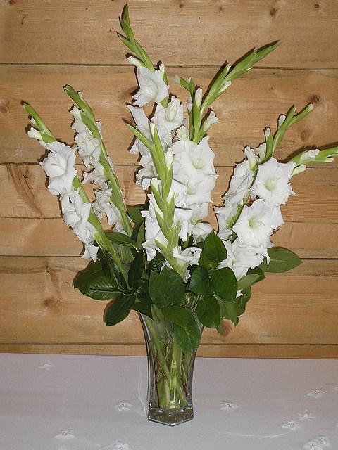the 25 best gladiolus wedding flower photos ideas on pinterest gladiolus flower photos. Black Bedroom Furniture Sets. Home Design Ideas