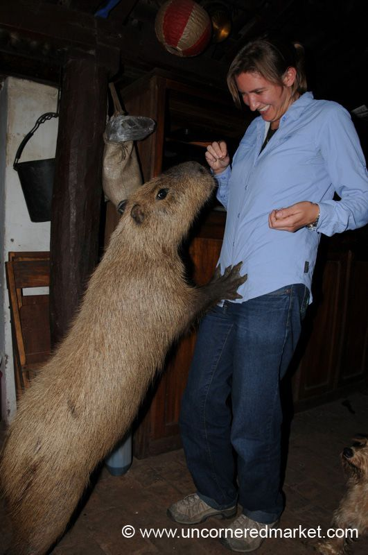 Why visit Paraguay? To get hugged by a ROUS (Rodent of Unusual Size), of course :)