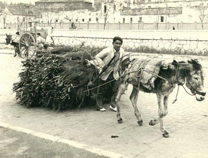Archivo fotográfico museo de artes populares de Málaga. http://www.museoartespopulares.com/archivo/