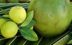 Remedios naturales contra celulitis - Loción de coco con limón - Uso Externo. Ingredientes: 6 cucharadas de aceite de coco; 2 cucharadas de aceite de limón; 1 cucharada de jugo de pomelo. Mezcle todos los ingredientes en un recipiente. Pase la mezcla en la región afectada todos los días, masajeando suavemente con movimentos circulares. Le amás sobre remedios naturales contra la celulitis: http://saludtotal.net/remedios-naturales-celulitis/