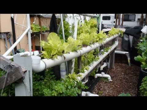 66 best images about aeroponics and aquaponics on pinterest for Garden pool aquaponics