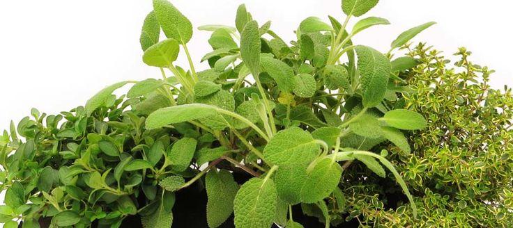 Der großer Kräuter-Bag hier bepflanzt mit Thymian, Salbei und Oregano. Holt euch duftende Kräuter auf eure Balkone!