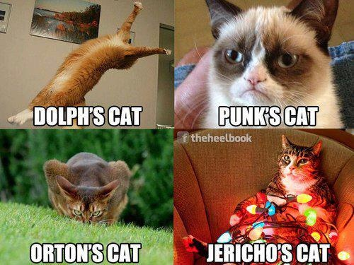 I didn't know Dolph Ziggler, CM Punk, Randy Orton and Chris Jericho had cats?