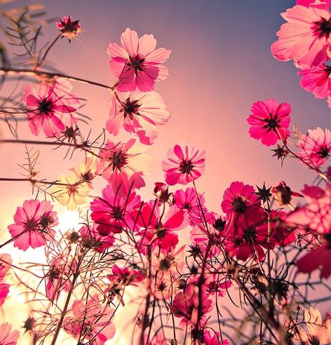 im a flower child.<3