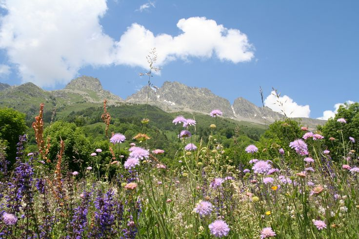 Alpe mobili ~ 15 best my images of . oisans alpe dhuez area images on