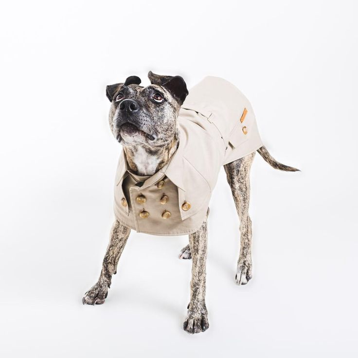Dress your dog in style this winter with this timeless designer trench coat by Berlin-based studio happystaffy.me.