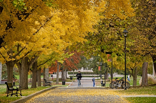 Susquehanna University...can't tell you how many times I've walked this path.  I can almost smell the Ginko berries!