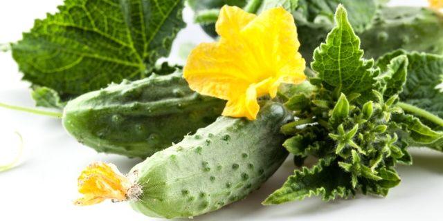 Pěstujte s námi: okurky nakládačky od semene ke sklizni