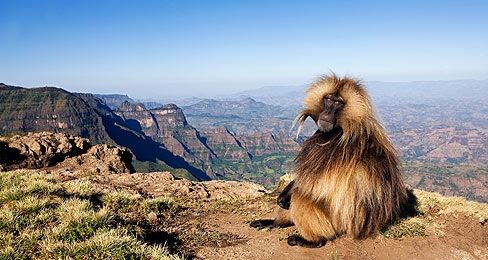 ethiopia - Google Search