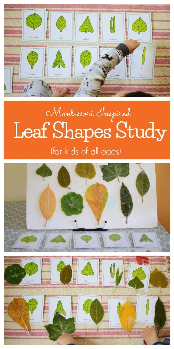 Montessori Inspired Leaf Shapes Study