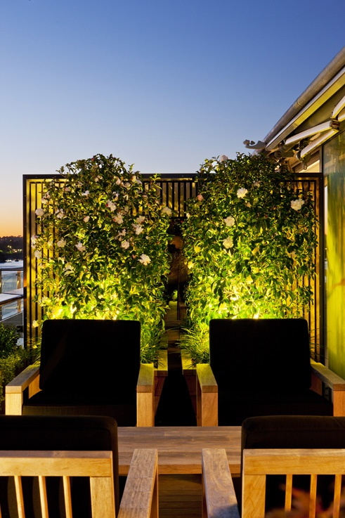 Uplighting feature trees in pots. Walsh Bay, NSW Australia. Anthony Wyer + Associates