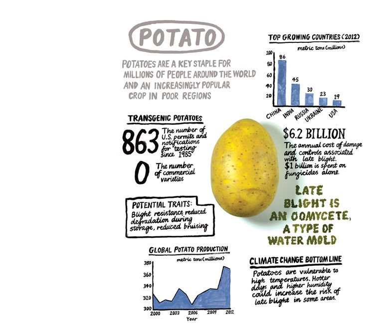 GMOs Could be an Important Tool in Feeding the World