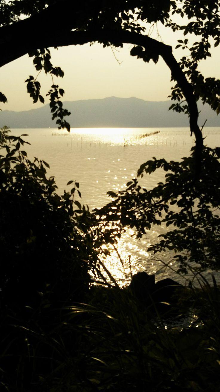 夏の日射し、季節の輪廻。わかってはいても、居合わせるとやっぱり辛いもの。。。