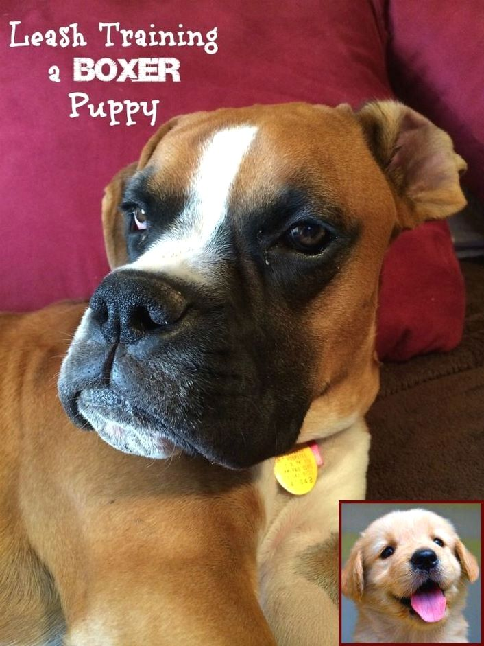 1 Have Dog Behavior Problems Learn About Potty Training Puppy Los