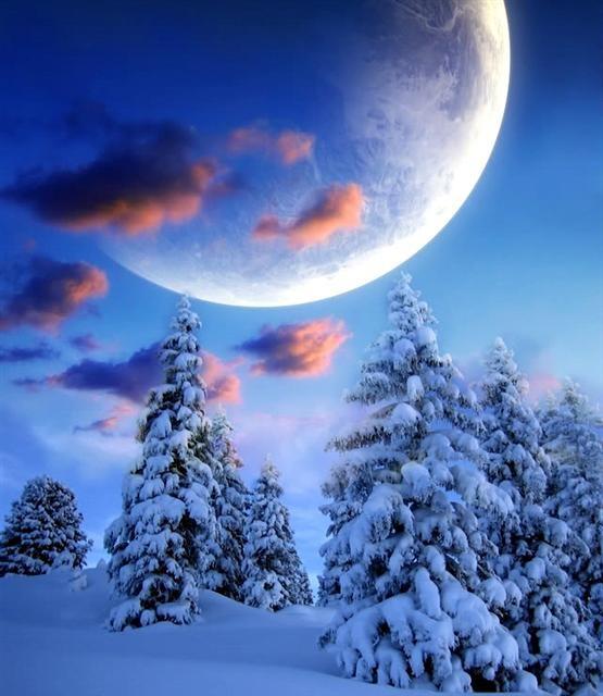 .Snowy Pine, Winter Moon, Winter Trees, Beautiful Places, Winter Wonderland, Blue Moon, Christmas Trees, Blue Things, Snowy Moon