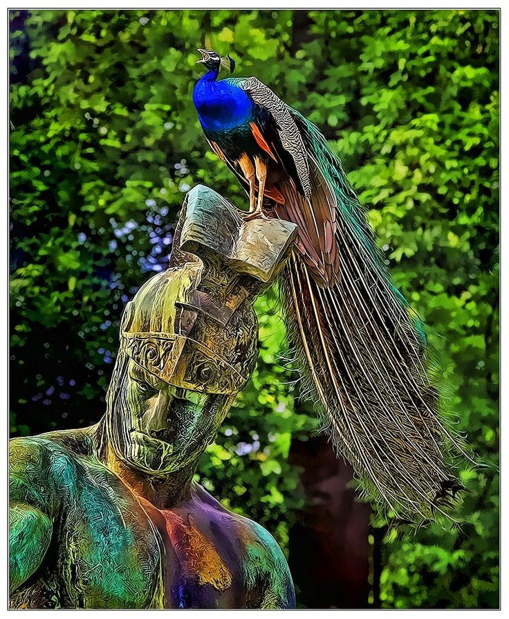 605 Best Images About Peacock On Pinterest Pictures Of