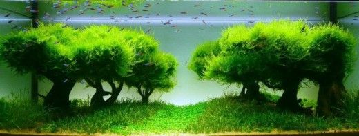 Besides the beautiful fish, a fish tank or a pond needs accessories to make it even more beautiful. Aquarium accessories can vary from aquatic plants to themed tank accessories...