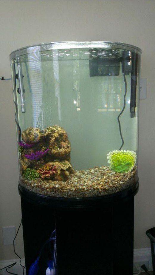 Best 25 30 gallon fish tank ideas on pinterest 1 gallon for 30 gallon long fish tank