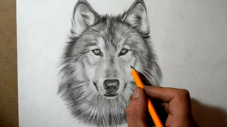 how to draw a wolf - Google Search