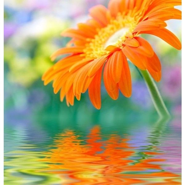 Hd flower picture 01 hd pictures Free stock photos in Image format:... ❤ liked on Polyvore featuring backgrounds