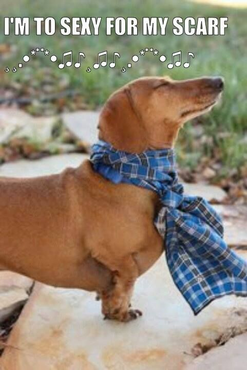Dachshunds know their sexy
