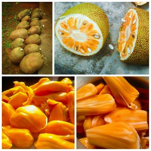 Golden Jackfruit