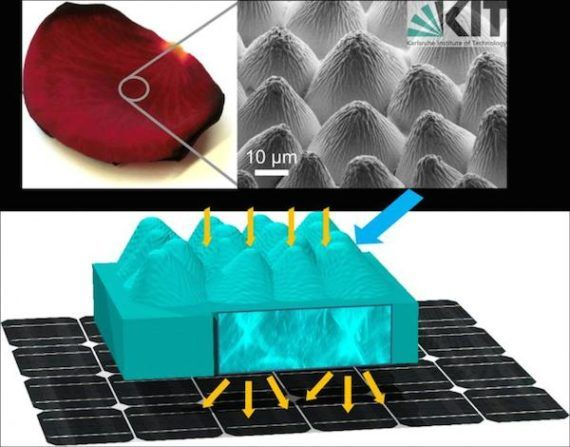 Moth Eyes And Roses Inspire Solar Cell Design Photovoltaic Cells Solar Cell Photovoltaic
