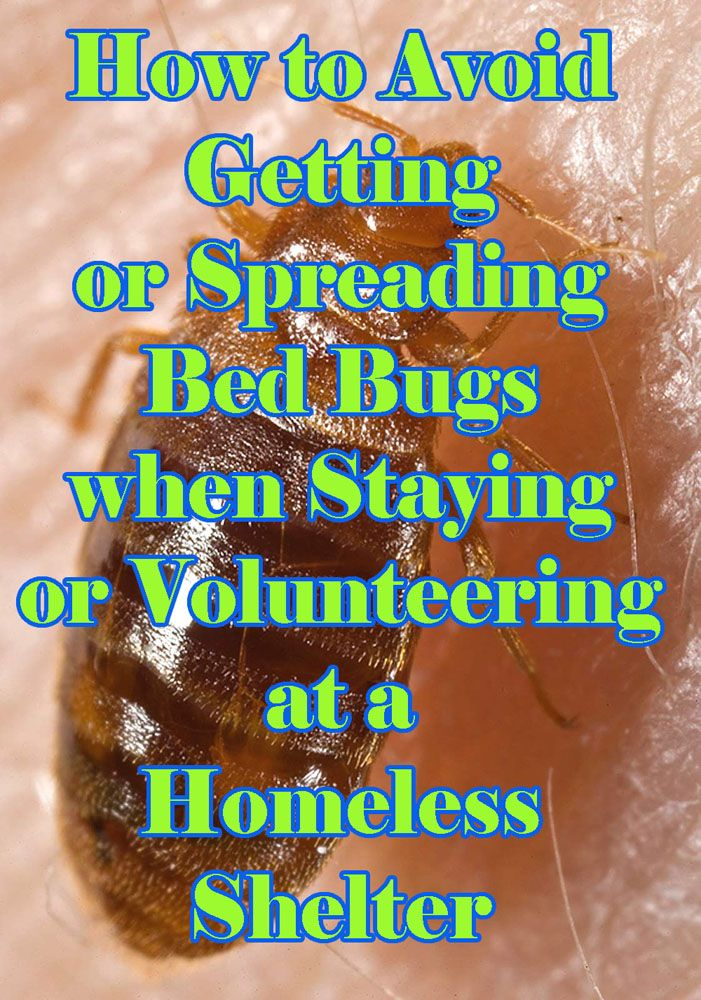 How To Avoid Getting Bed Bugs from Homeless Shelters Bed
