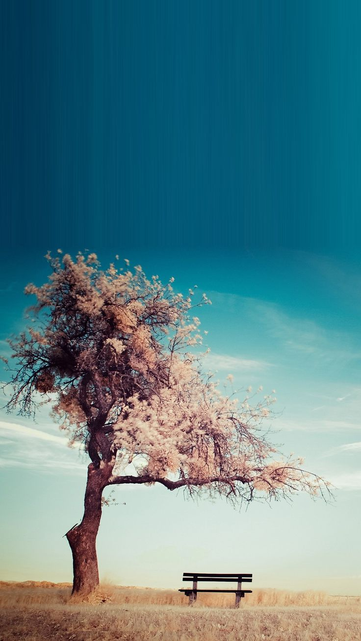 Hd wallpaper for smartphone - Tree Bench Smartphone Hd Wallpapers