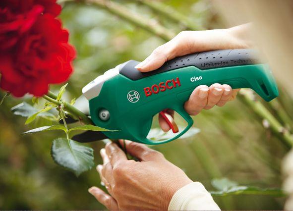 Rosen schneiden | DIY Academy