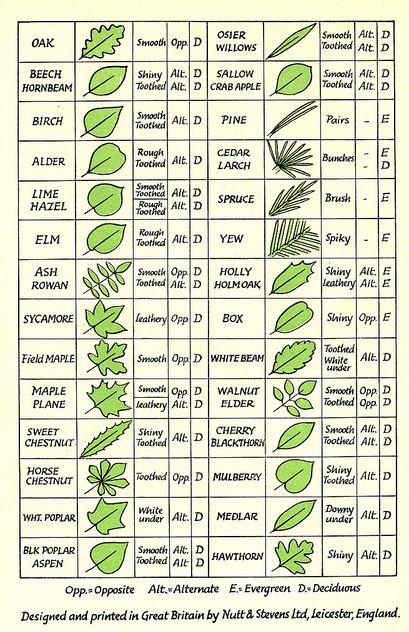 wixxa: Leaf Chart - phoebe bird