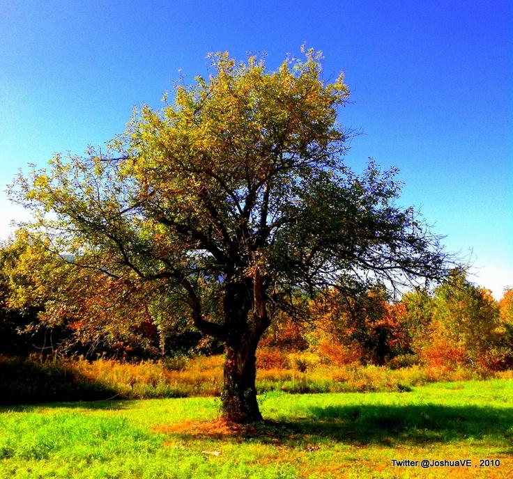 tree colors
