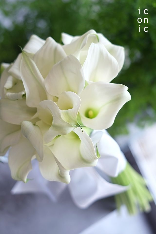 calla lily,wedding bouquet,iconicflower
