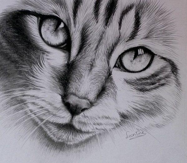 Cat finished by Horsenart95.deviantart.com on @deviantART