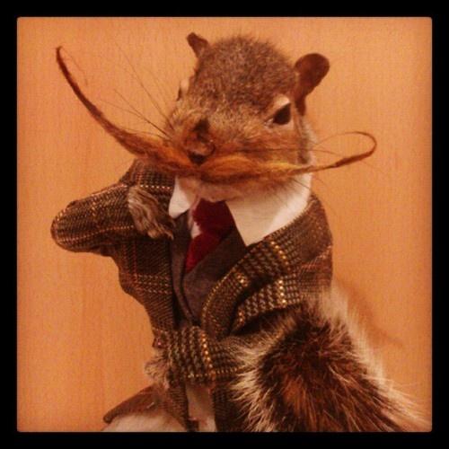 anthropomorphic squirrel taxidermy - Google Search