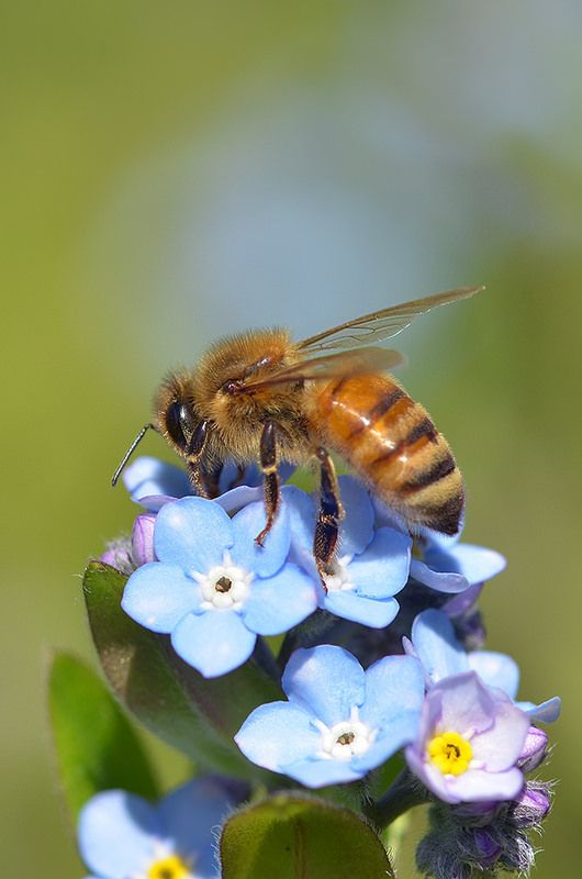 Perhaps I will bee here for a little while longer. Habits are hard to break. Forget me not, beecause......