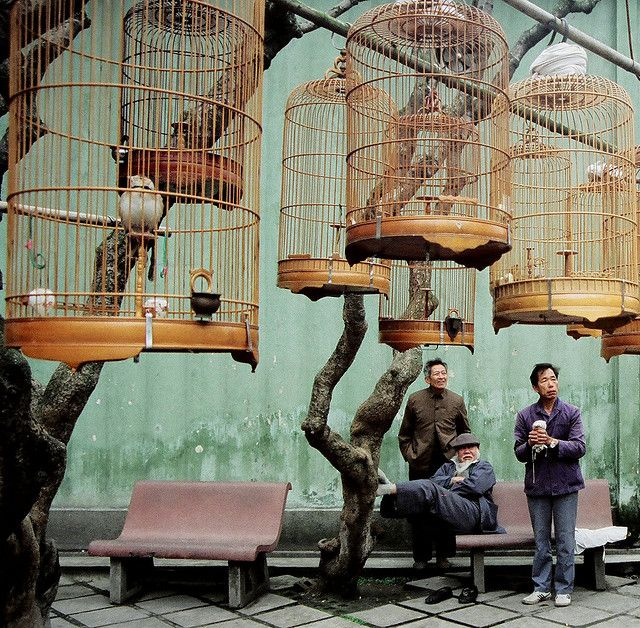 Birdcage Gathering Guangzhou 1989 by David G. #photography