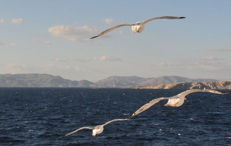 Άργησε σήμερα να φανεί στο βάθος της κυανής γραμμής κι ανησυχούν. Στέκονται με το κεφάλι ψηλά, αγναντεύοντας προς τη θάλασσα,…