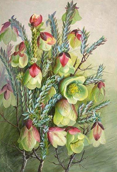 Ellis Rowan Botanical Artist Painting
