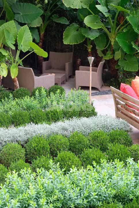 1000 id es sur le th me alocasia plant sur pinterest plante d 39 int rieur - La maison du bananier ...