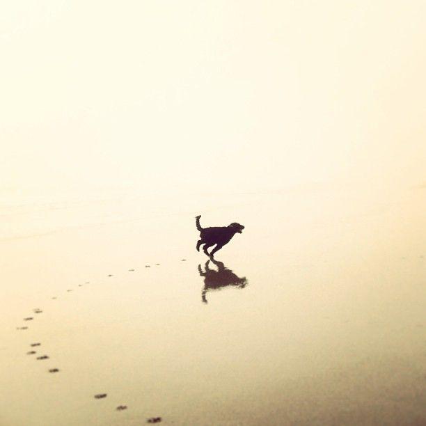 Dog & his shadow