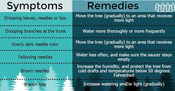 Symptoms and Remedies: Nurturing Norfolk Pines