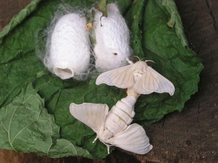 casa delle farfalle viagrande bachi da seta - Cerca con Google