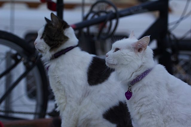 The thinkers. Two cats gazing out towards the horizon...probably contemplating their escape.