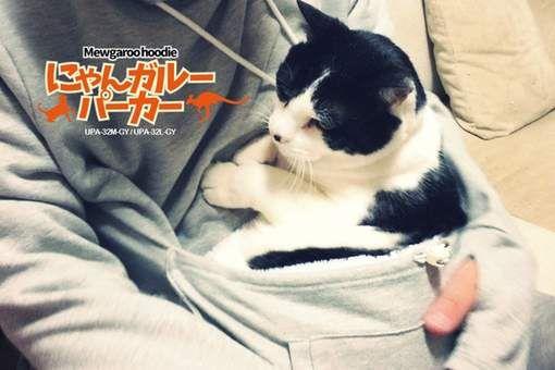 Met deze trui koop je (g)een kat in een zak - HLN.be