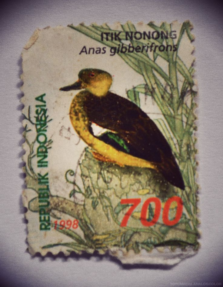 perangko Itik Nonong tahun 1998 (Rp 700)