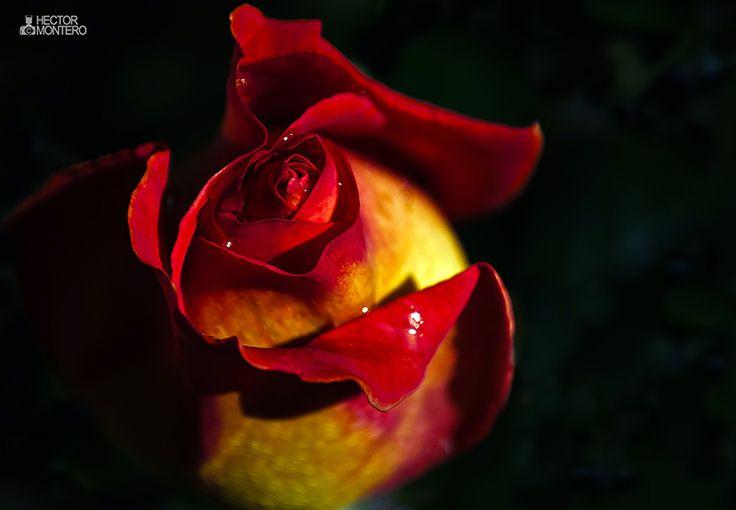 me encantan las flores con fondo negro...