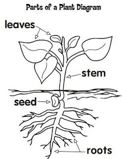 Parts of a plant diagram | Teacher's Lounge | Plants