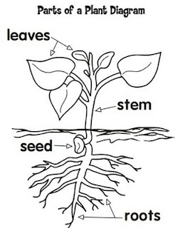 parts of a plant diagram teacher\u0027s lounge pinterest science From to Seed Plant Diagram parts of a plant diagram teacher\u0027s lounge pinterest science classroom, classroom and science