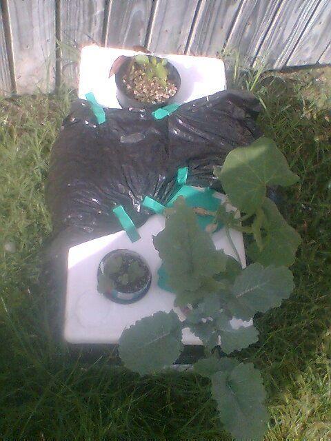 hydroponic grow box instructions